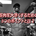 筋肉を大きくするための3つのポイントとは?